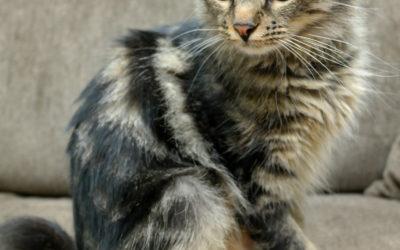 Kitty Lynn