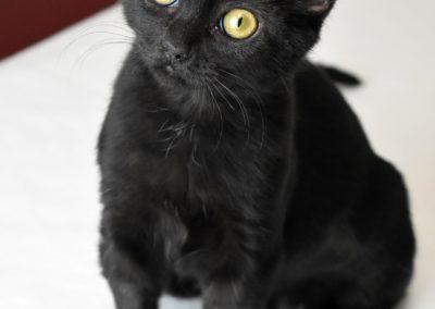 Sabrina (1)
