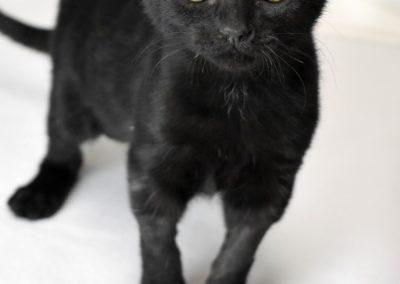 Sabrina (2)